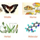 "View ""Best Scientific illustration services"""
