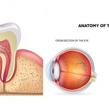 "View ""Medical Illustration Design Services"""
