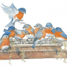 "View ""Bluebirds"""